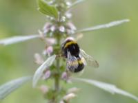 Insekten – Wo sind sie geblieben